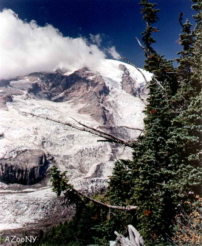 Mount-Rainer-Trees-on-Side-AZooNY.jpg